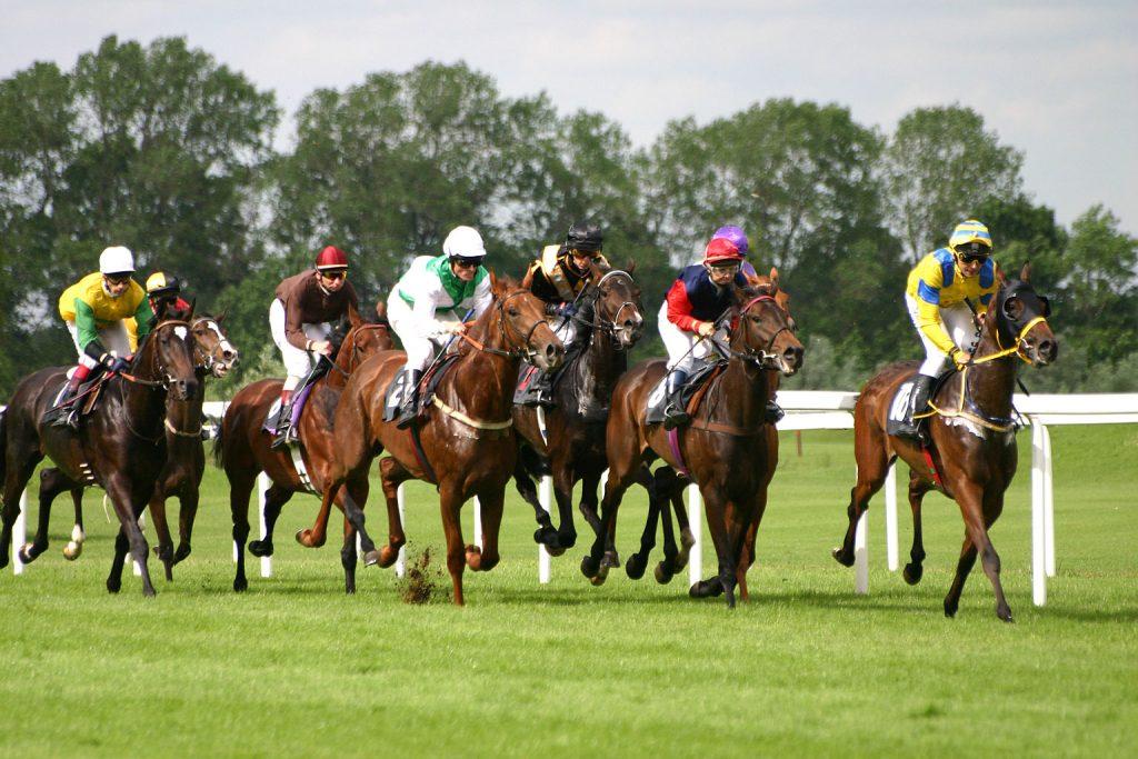 horse raciing